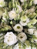Lisoanthus bianchi
