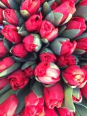Tulipani screziati