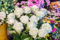 12 rose bianche gambo medio