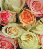 Mazzo di rose colore pastello -7rose