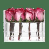 Rosas deep purple con caja acrílica (16 uds)