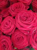 12 Rose