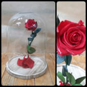 "Cúpula Rosa ""La Bella y la Bestia"""