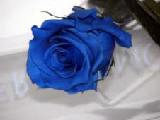 Rosa azul preservada (1 ud.)
