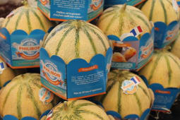 Melon Philibon de qualité - la pièce : environ 1.1kg