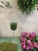 Copa de cristal con arreglo de planta fresca