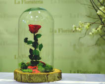 Rosa eterna (fanal madera)