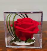 Trandafir criogenat, cub transparent sigilat