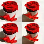 Rosestabilizzate in scatola singola