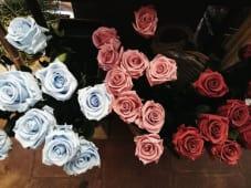 Rosas eternas (5 uds)