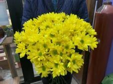 ყვითელი ხრიზანთემა