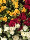 Rose a grappolo