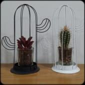 Cactus en Jaula