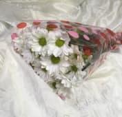 Margaritas blancas Primavera