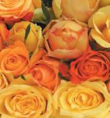 Mazzo di rose colore giallo arancione-7 rose