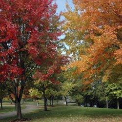 Dealing With Seasonal Changes in Workload