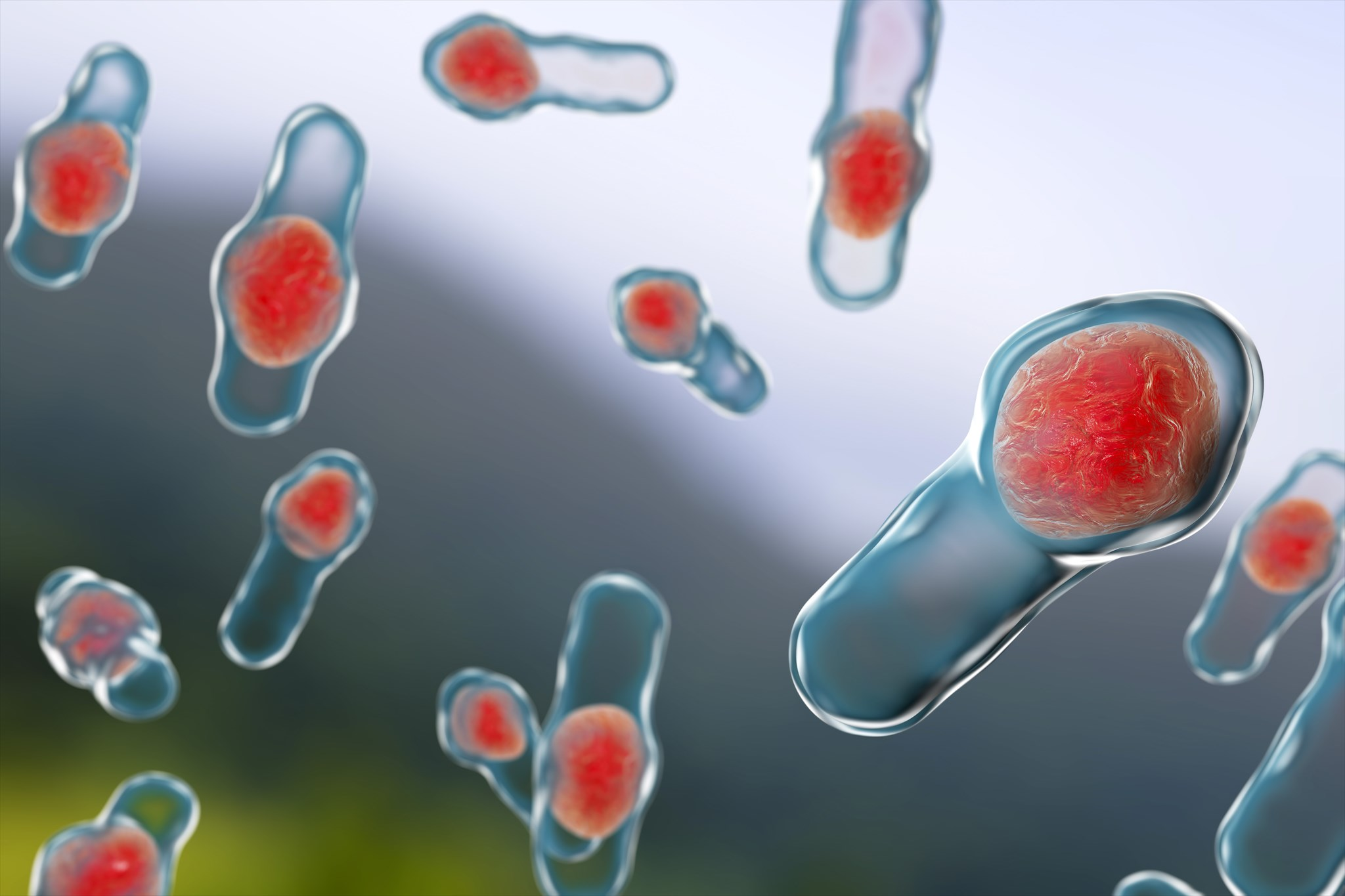 Clostridium Difficile infection: Essential knowledge for nurses and midwives
