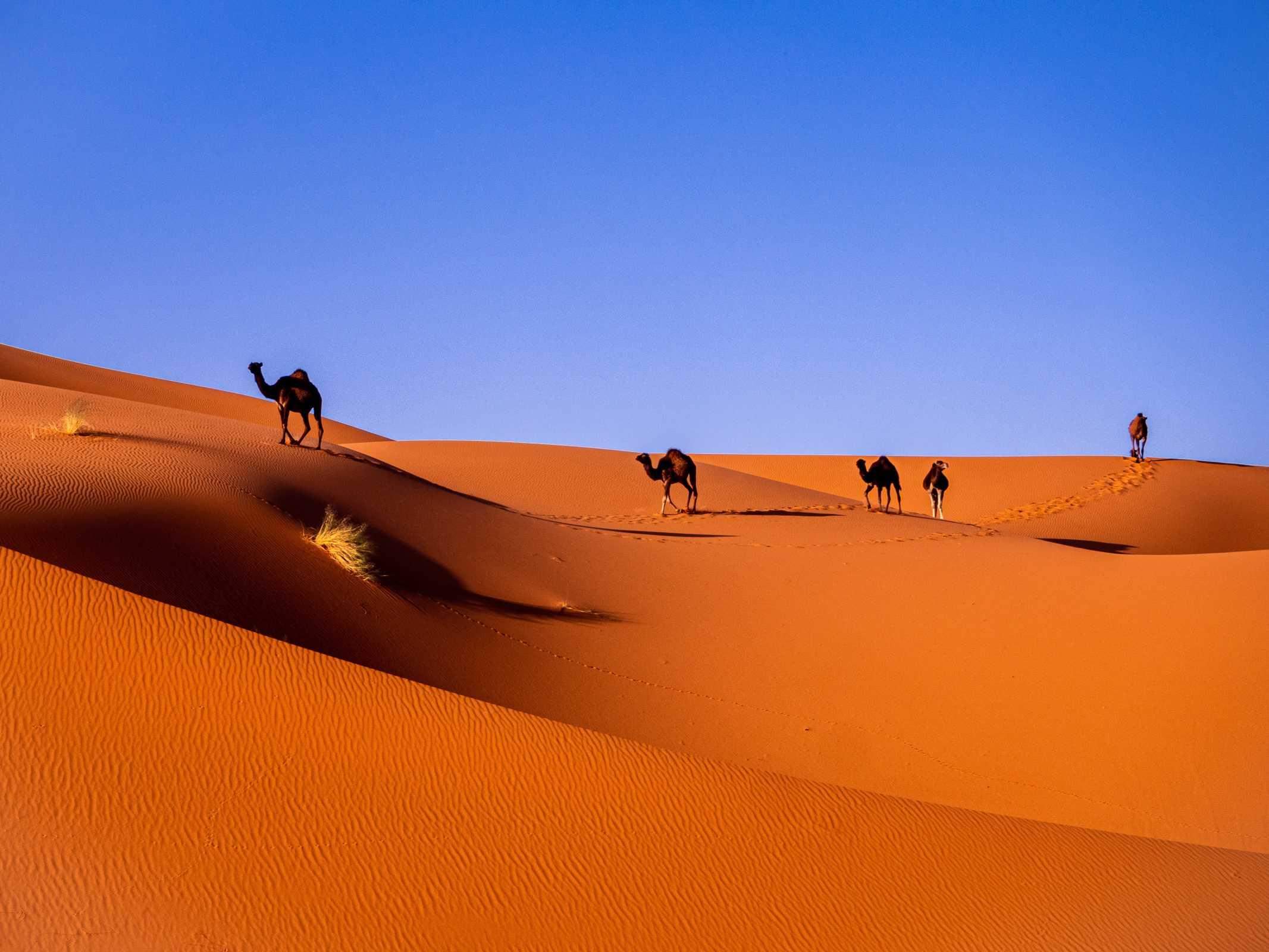 Informatietechnologie in Marokko