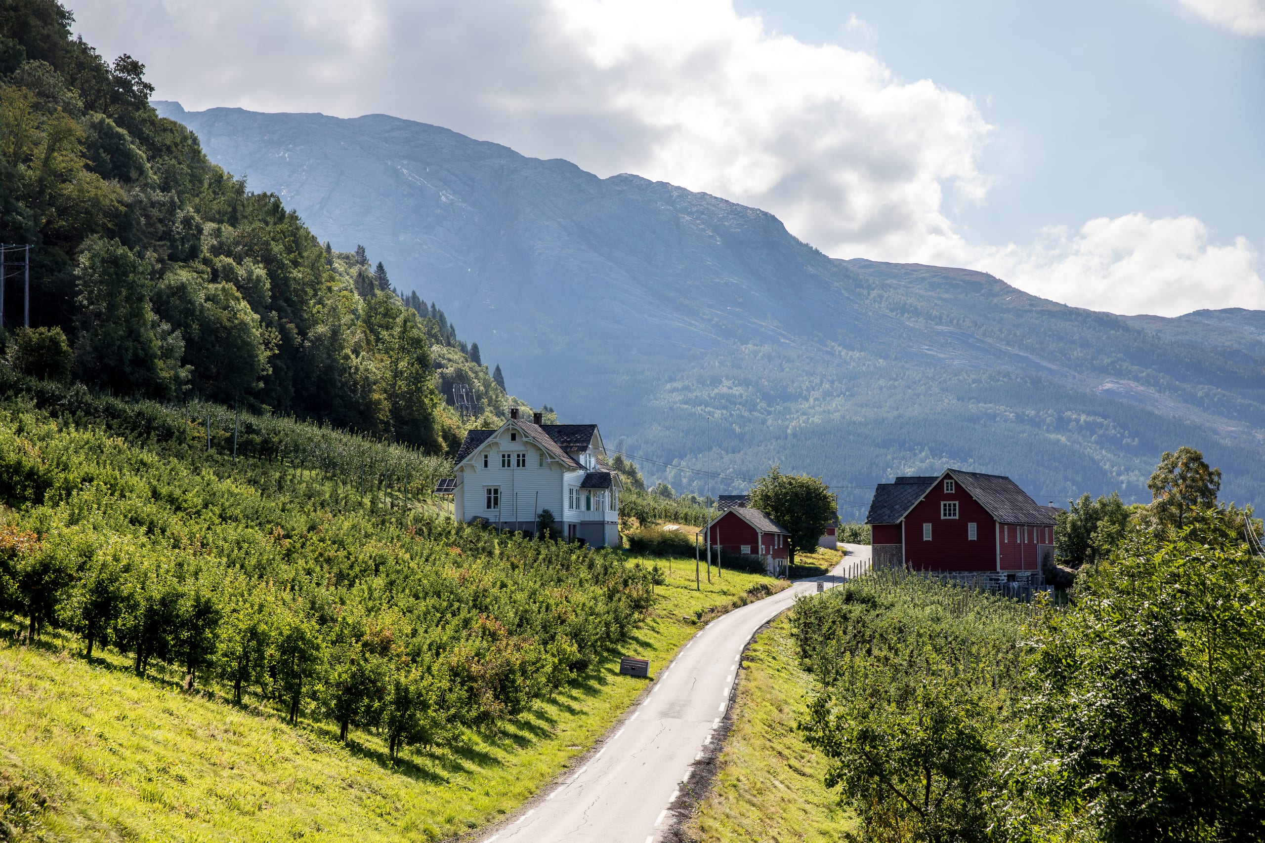 Hardanger apple farm