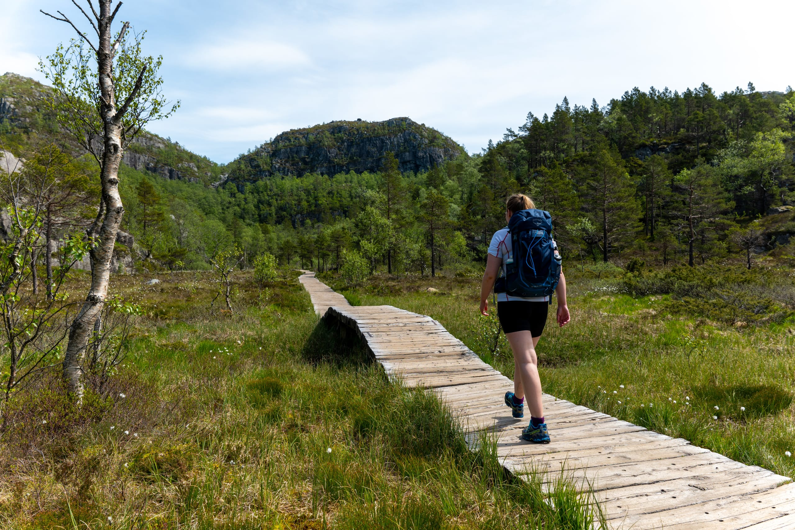 A hiker on his way to Preikestolen walking through lush terrain on a wooden path.