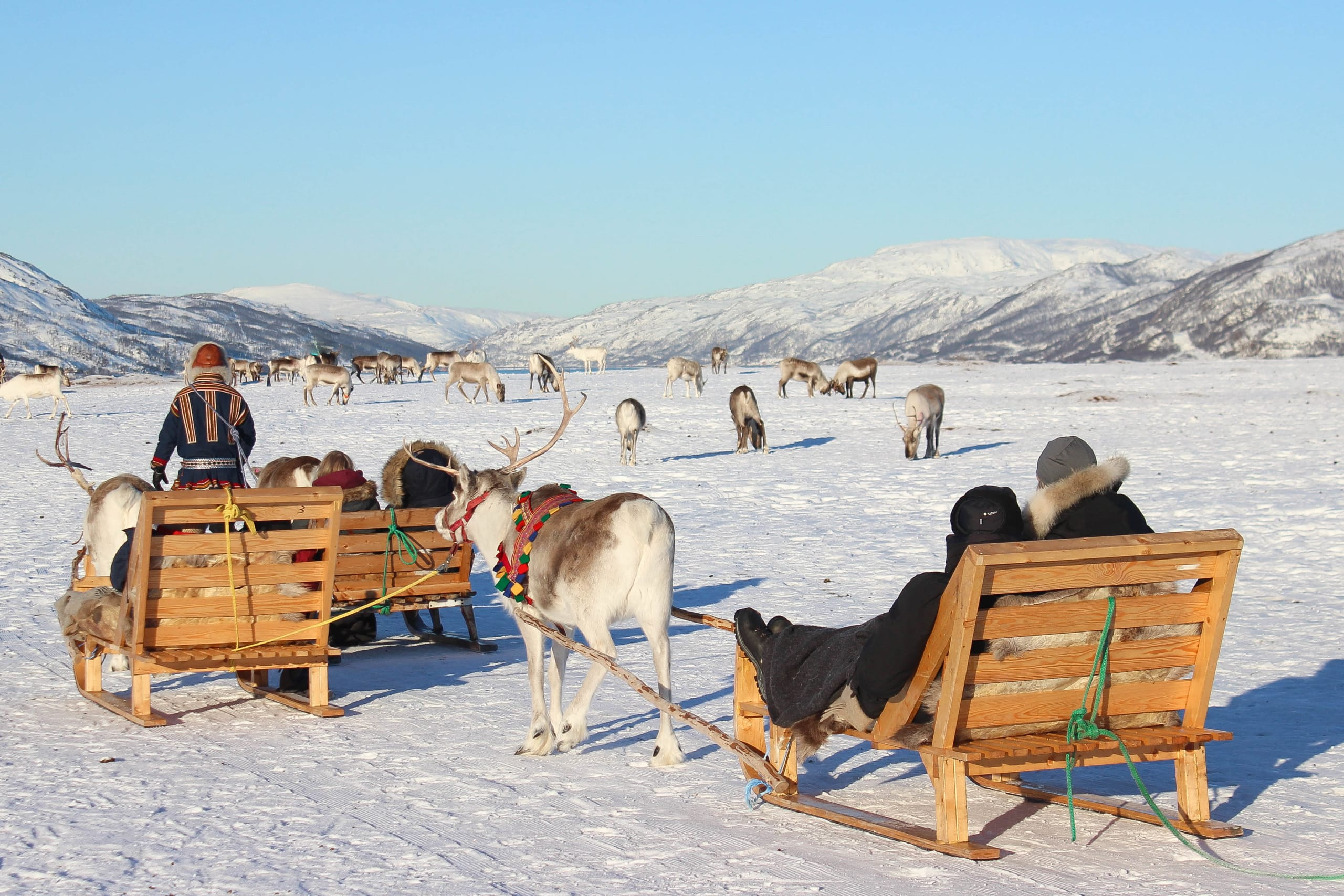 Reindeer sledding in Arctic Tromsø