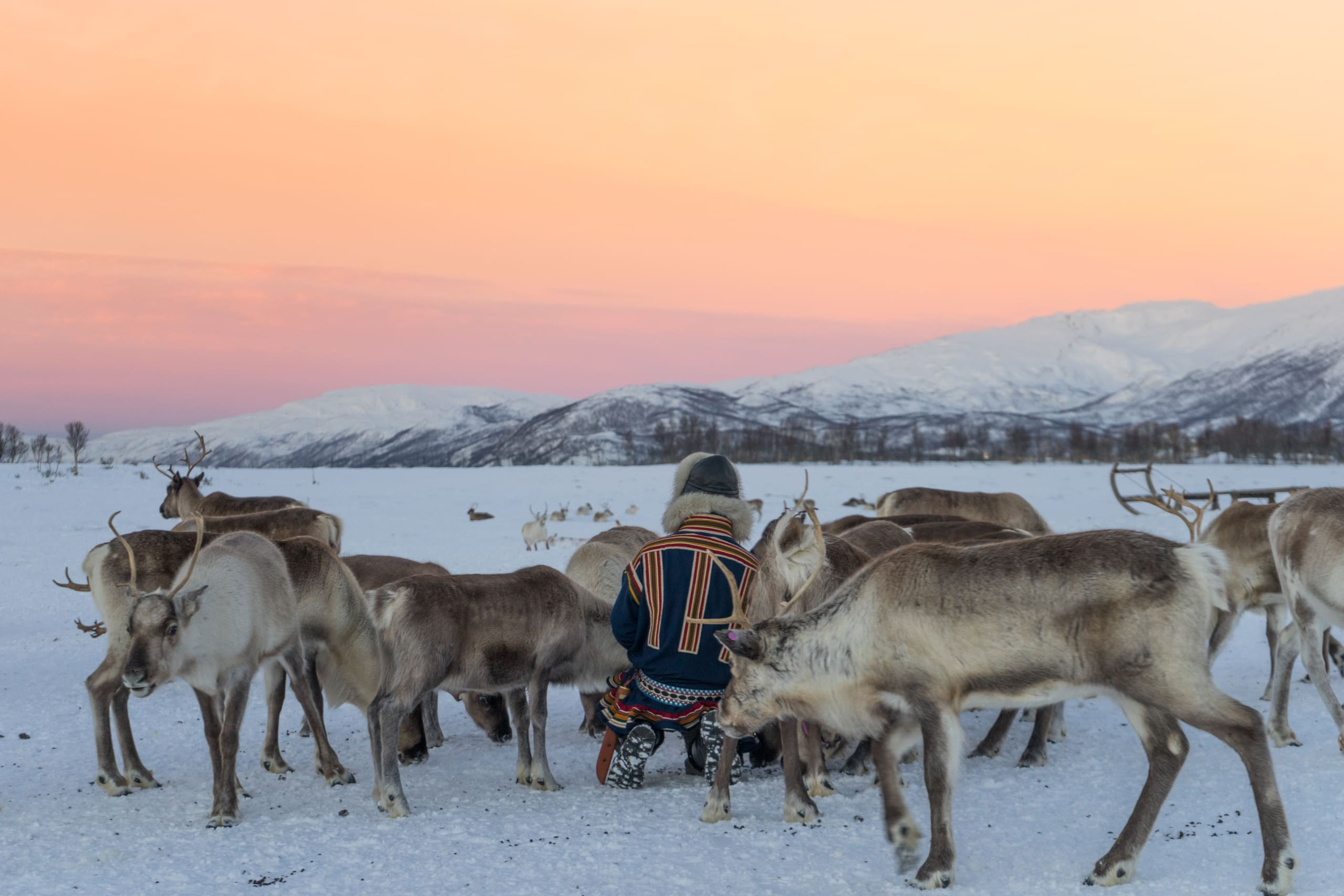 Feeding Reindeer in Tromsø
