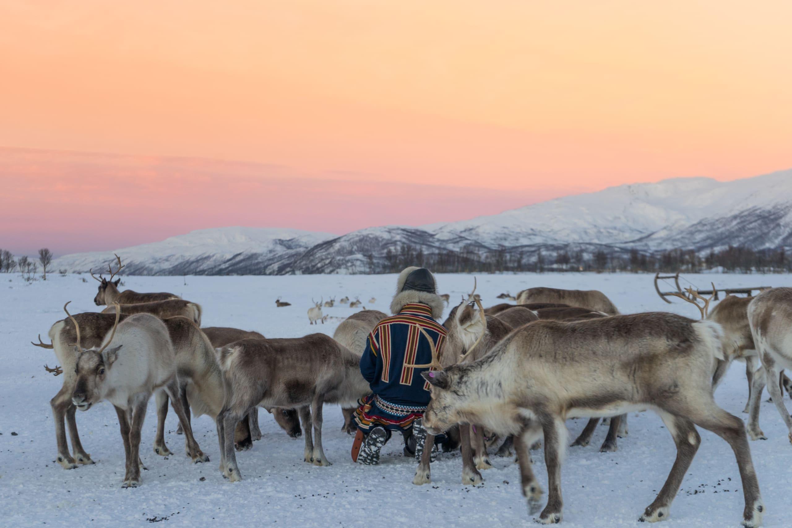 Feeding Reindeer in Tromsø