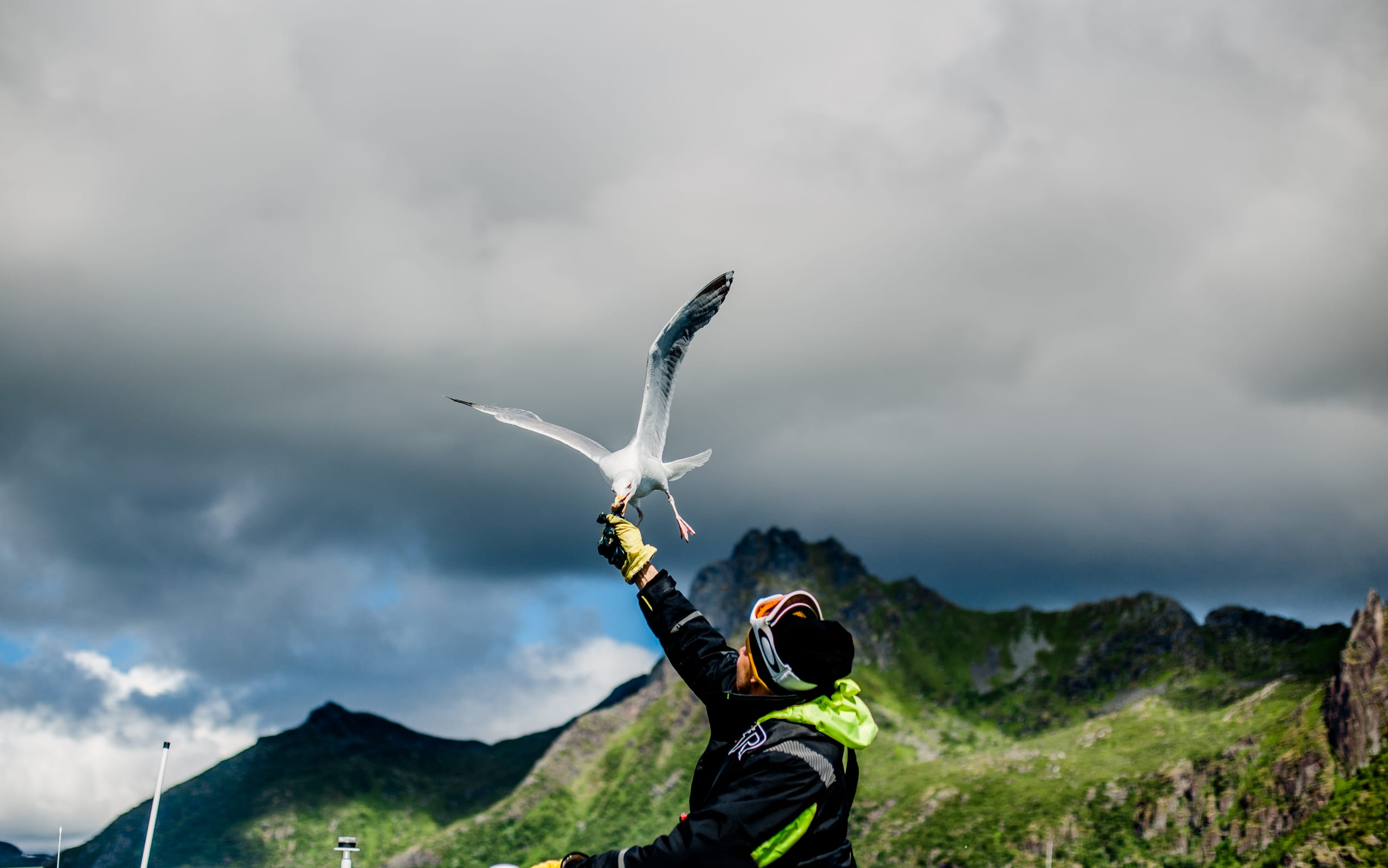 Man feeds seagull from the RIB in Trollfjord