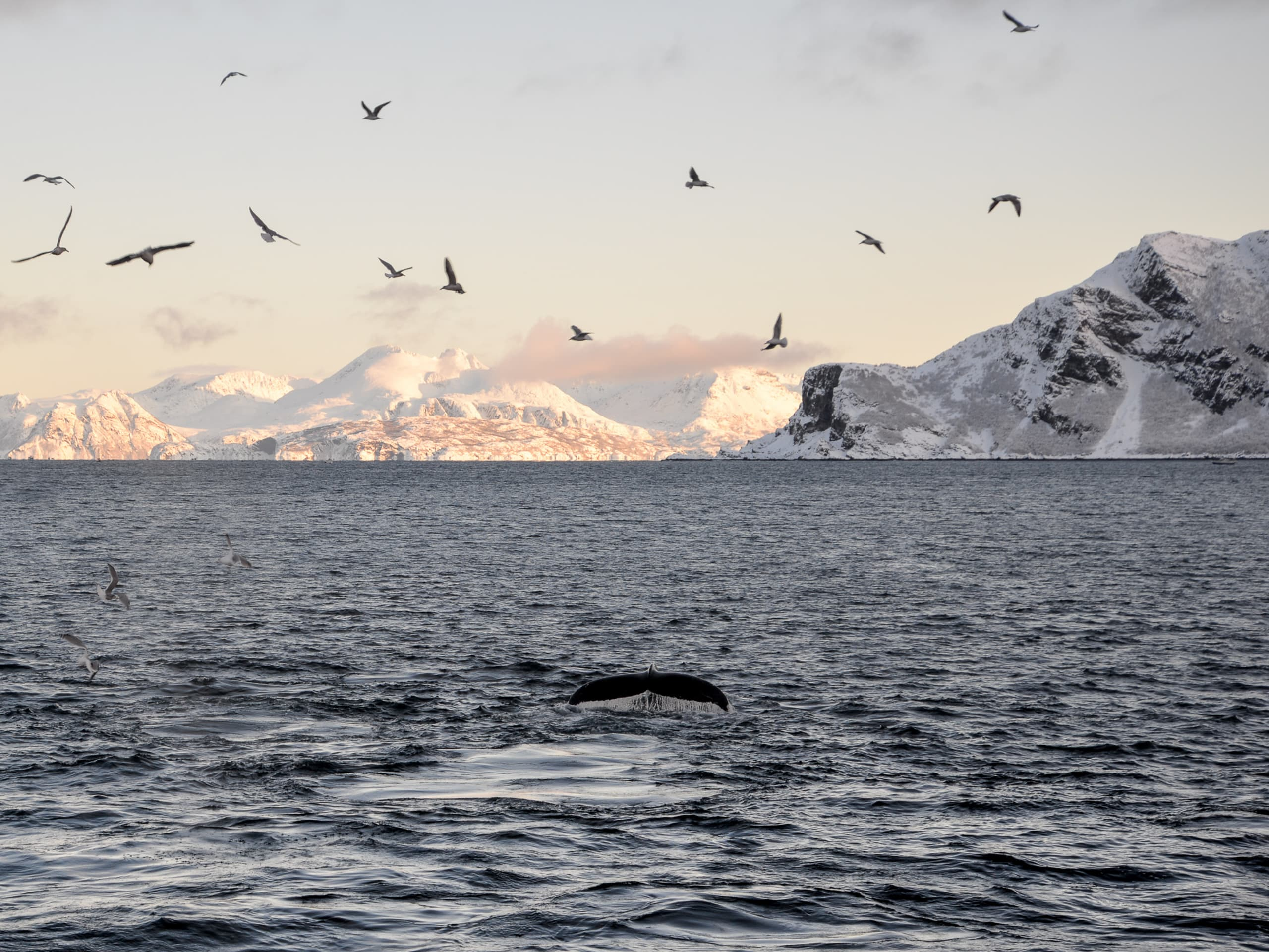 Whale spotted from Brim in Tromsø