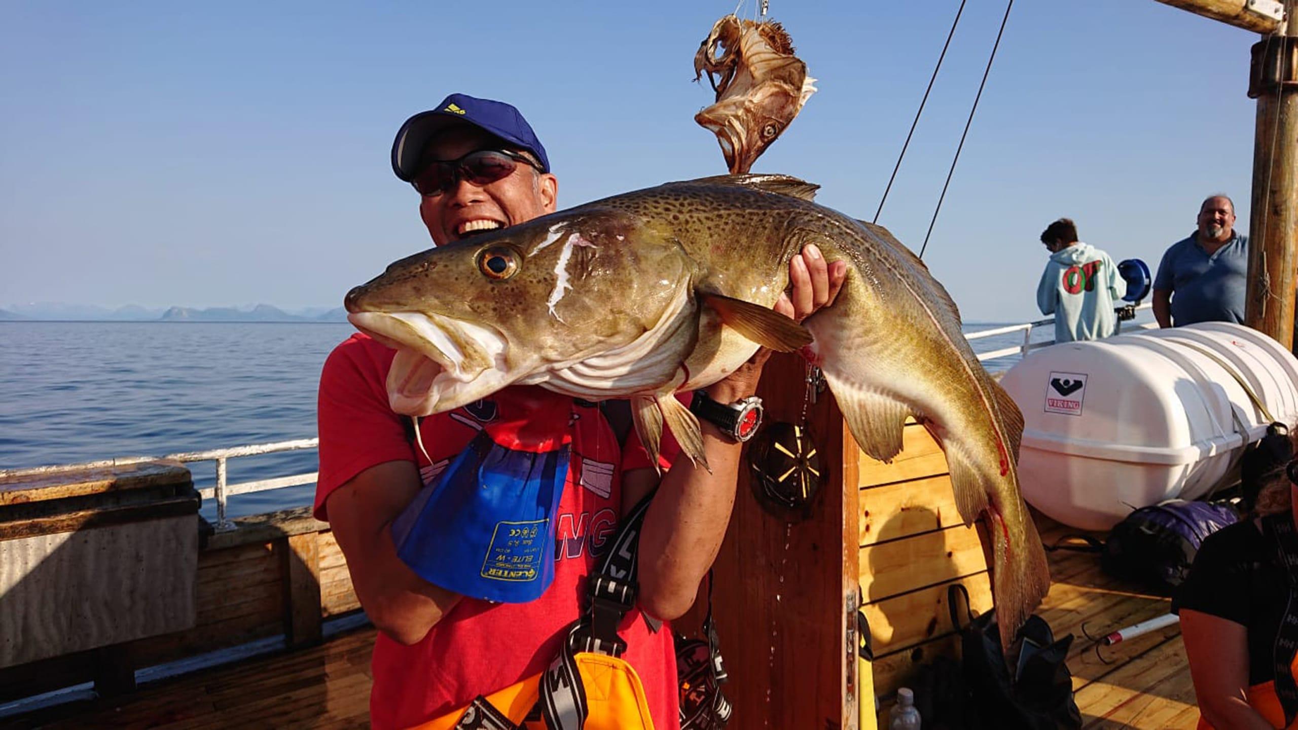 Huge Arctic cod