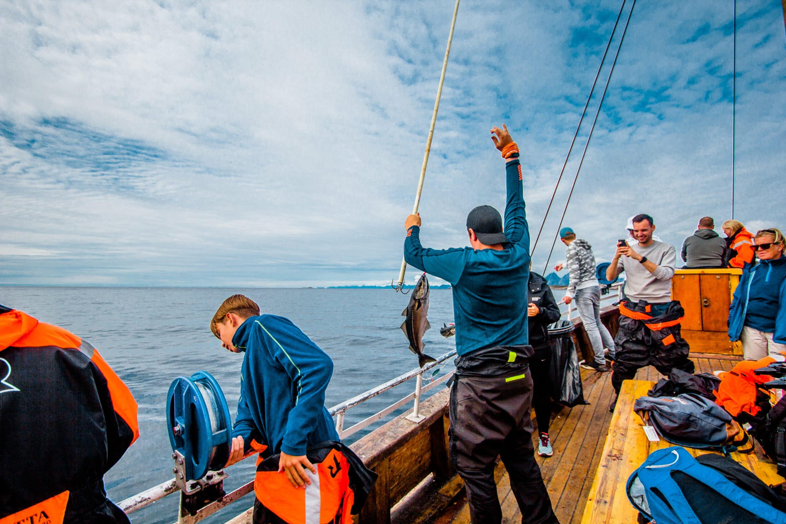 Arctic cod in Lofoten