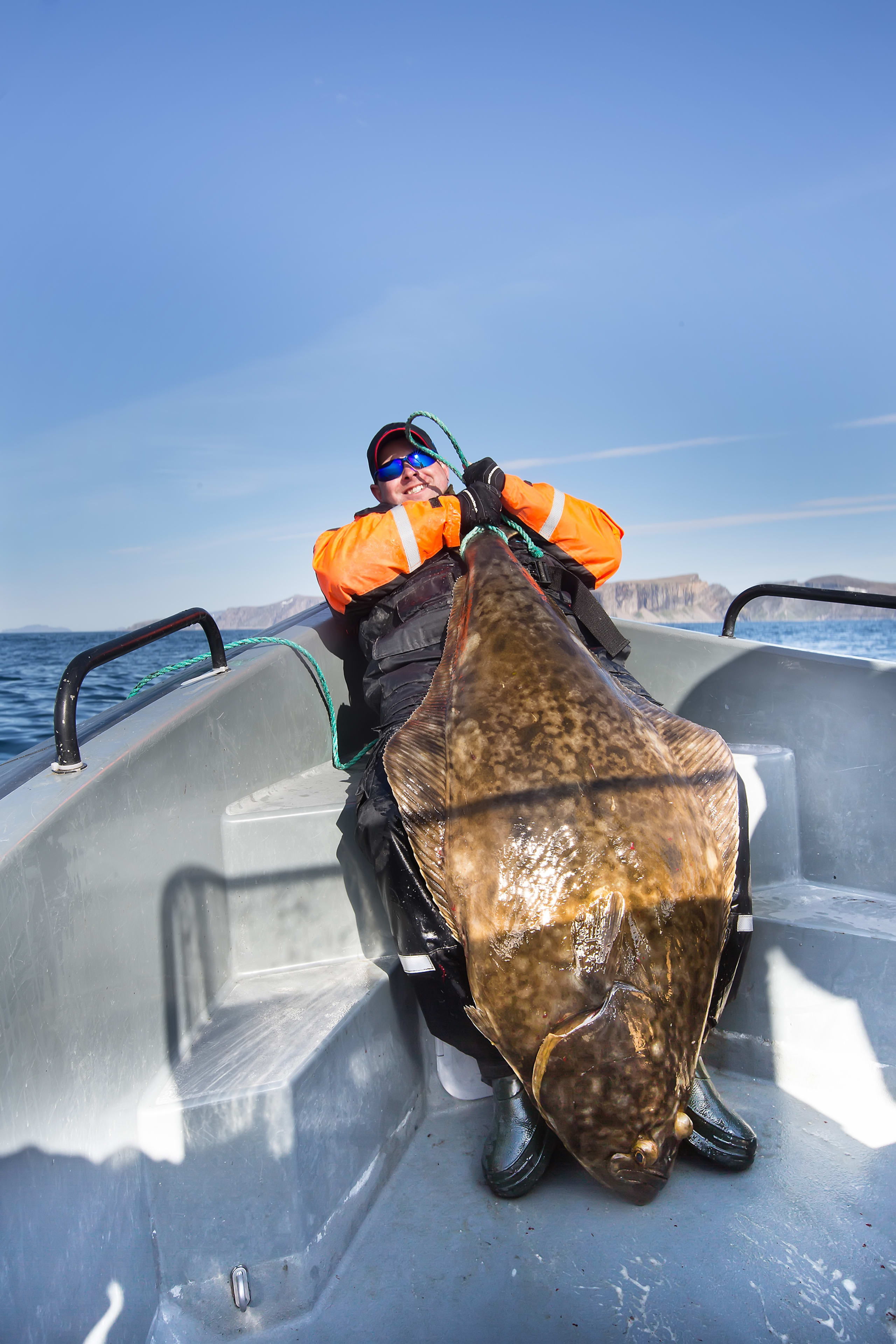 Large catch of Halibut