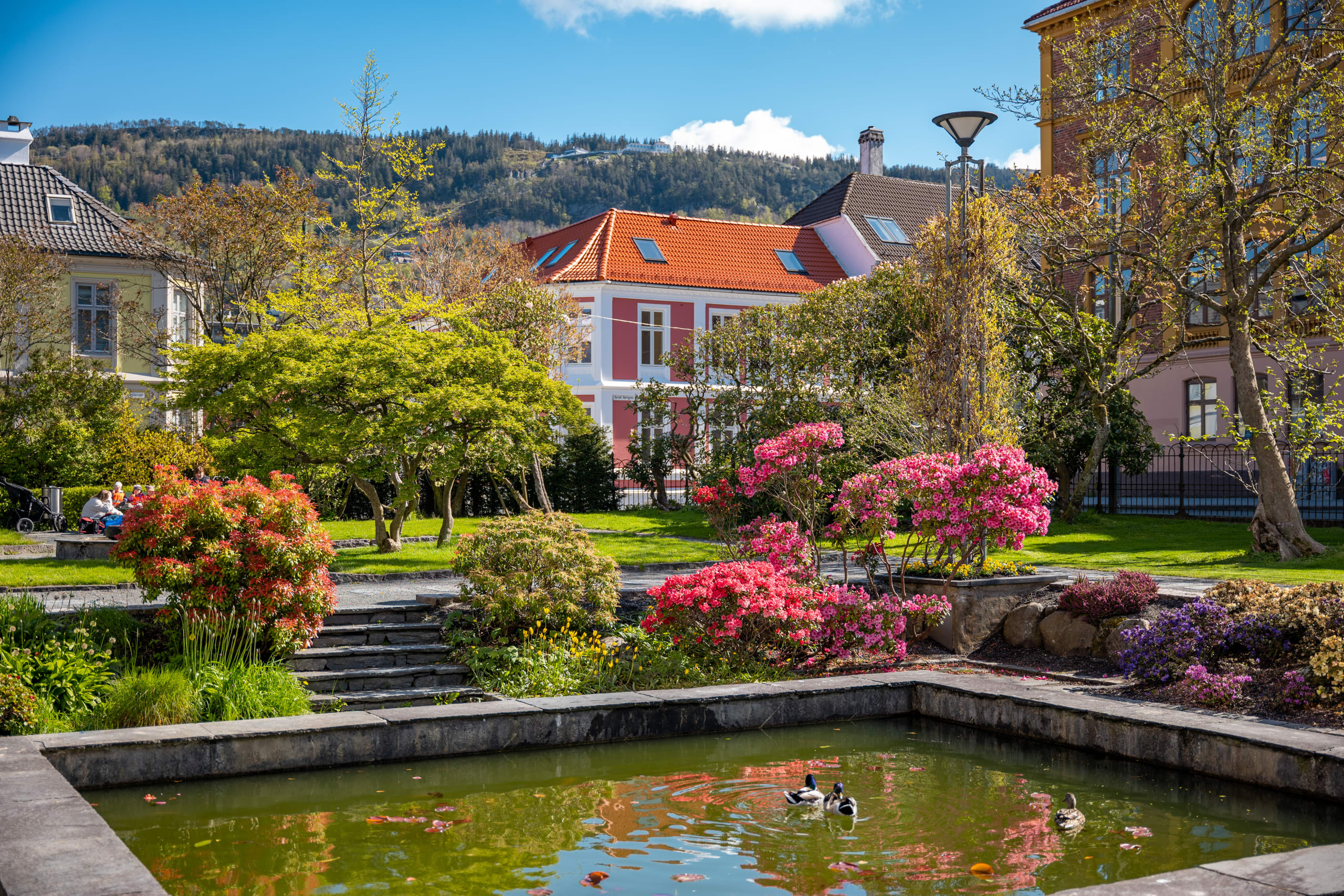 Lush park next to University Museum  in Bergen