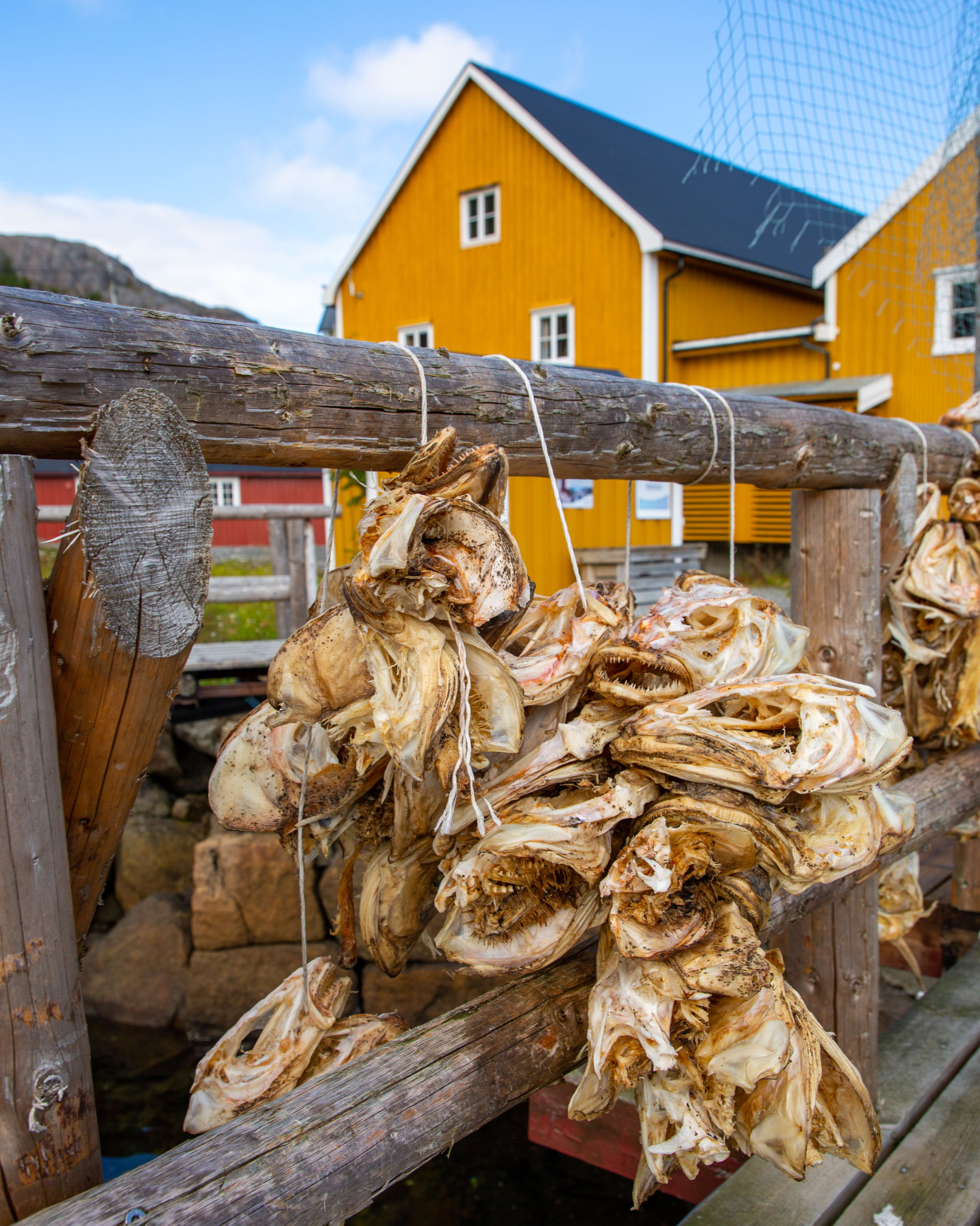 Stock fish drying in Nusfjord