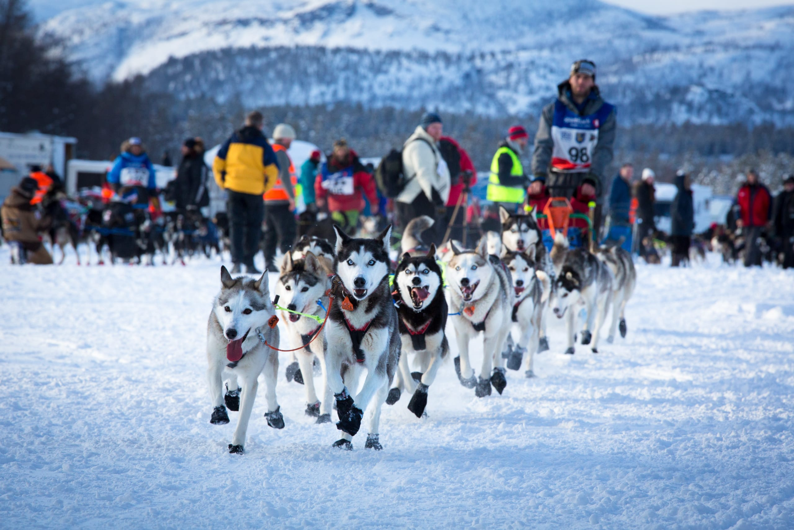Dog racing at Finnmarksløpet