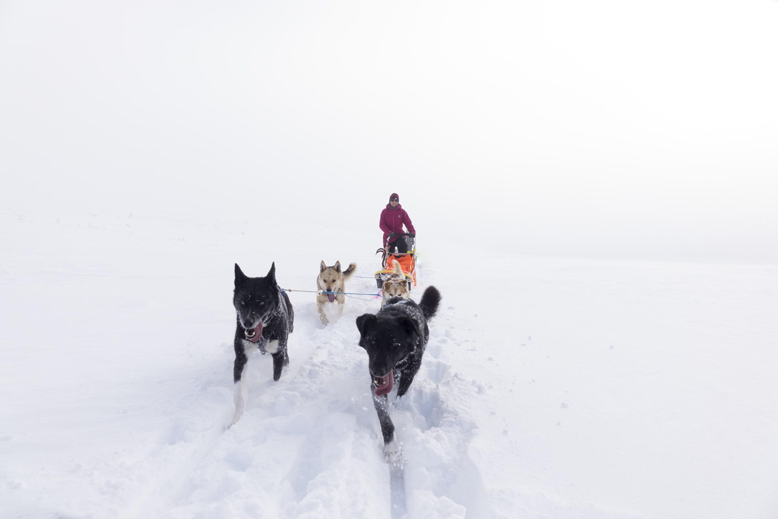 Dog sledding in Jotunheimen