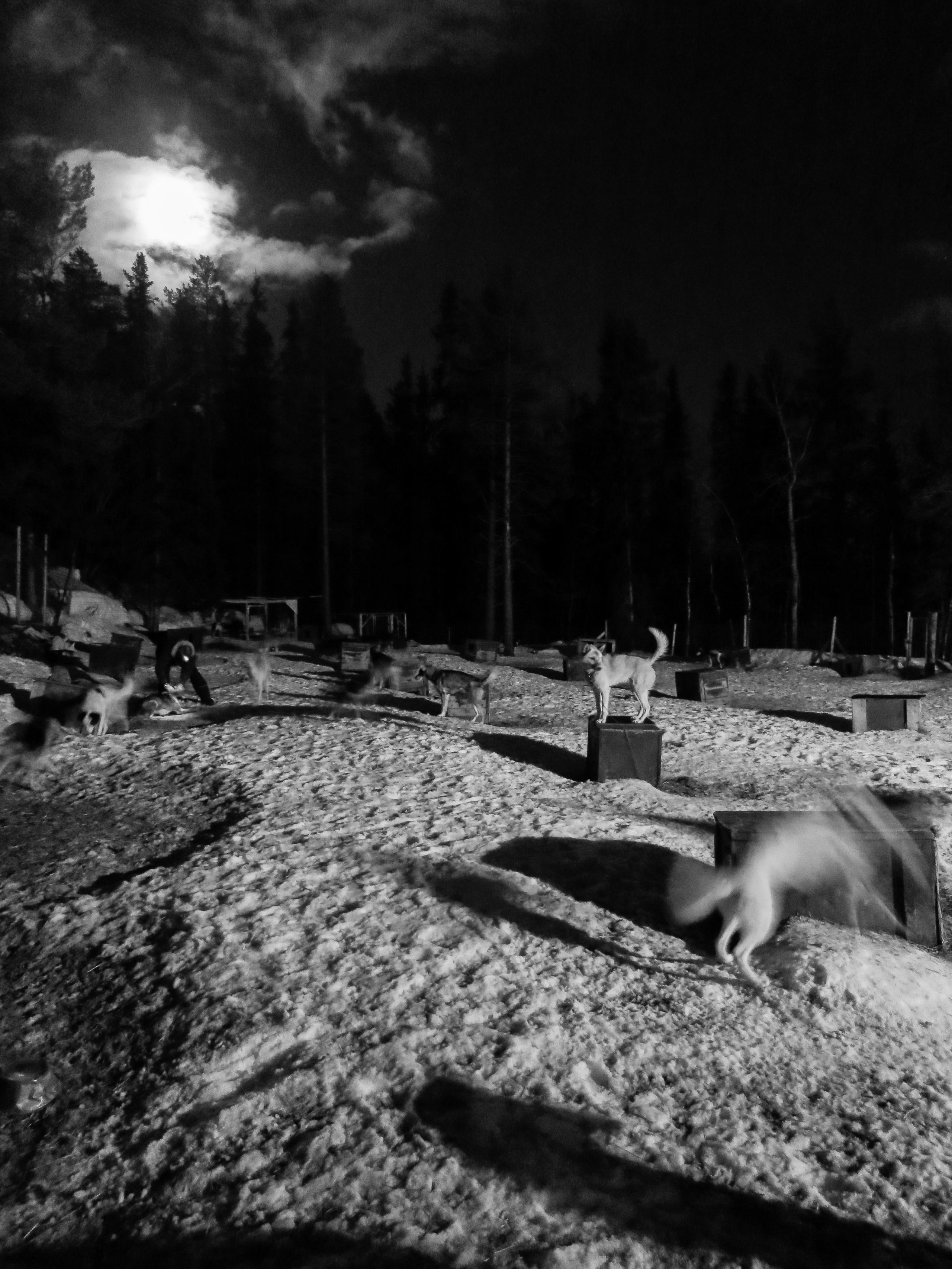 Moon light at Beito Husky Camp