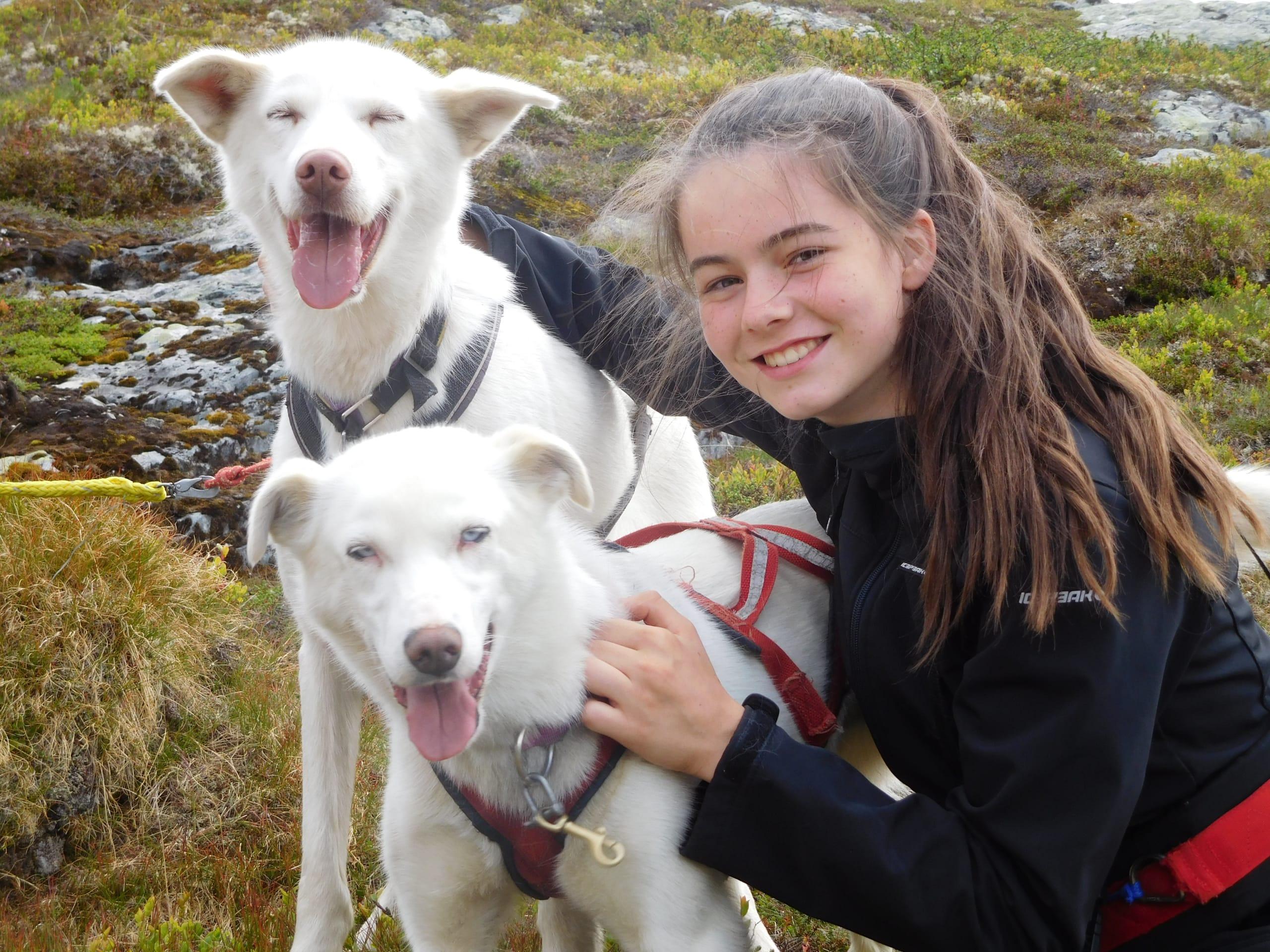 Friendly huskies on a mountain hike