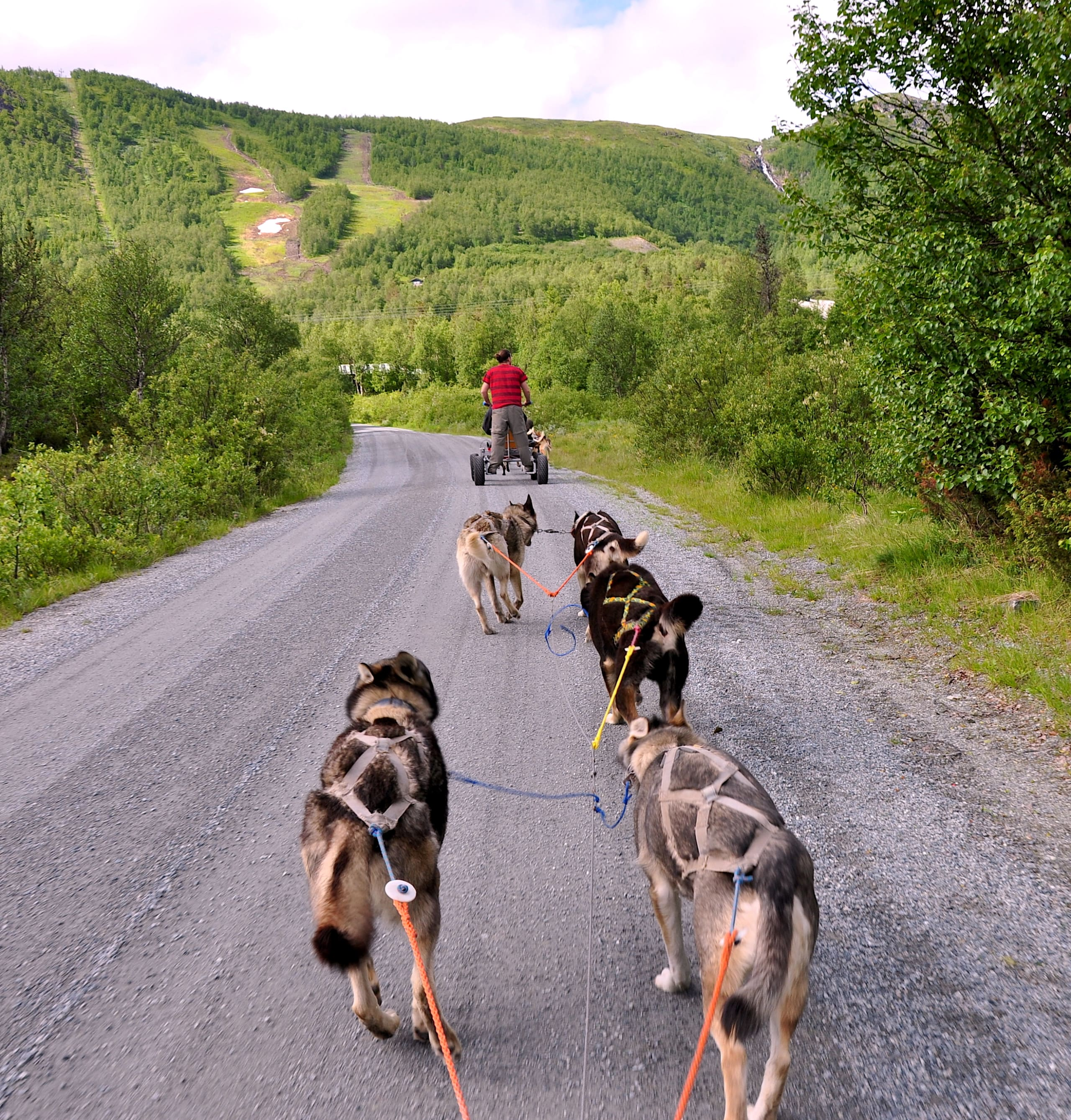 Dog sledding on wheels