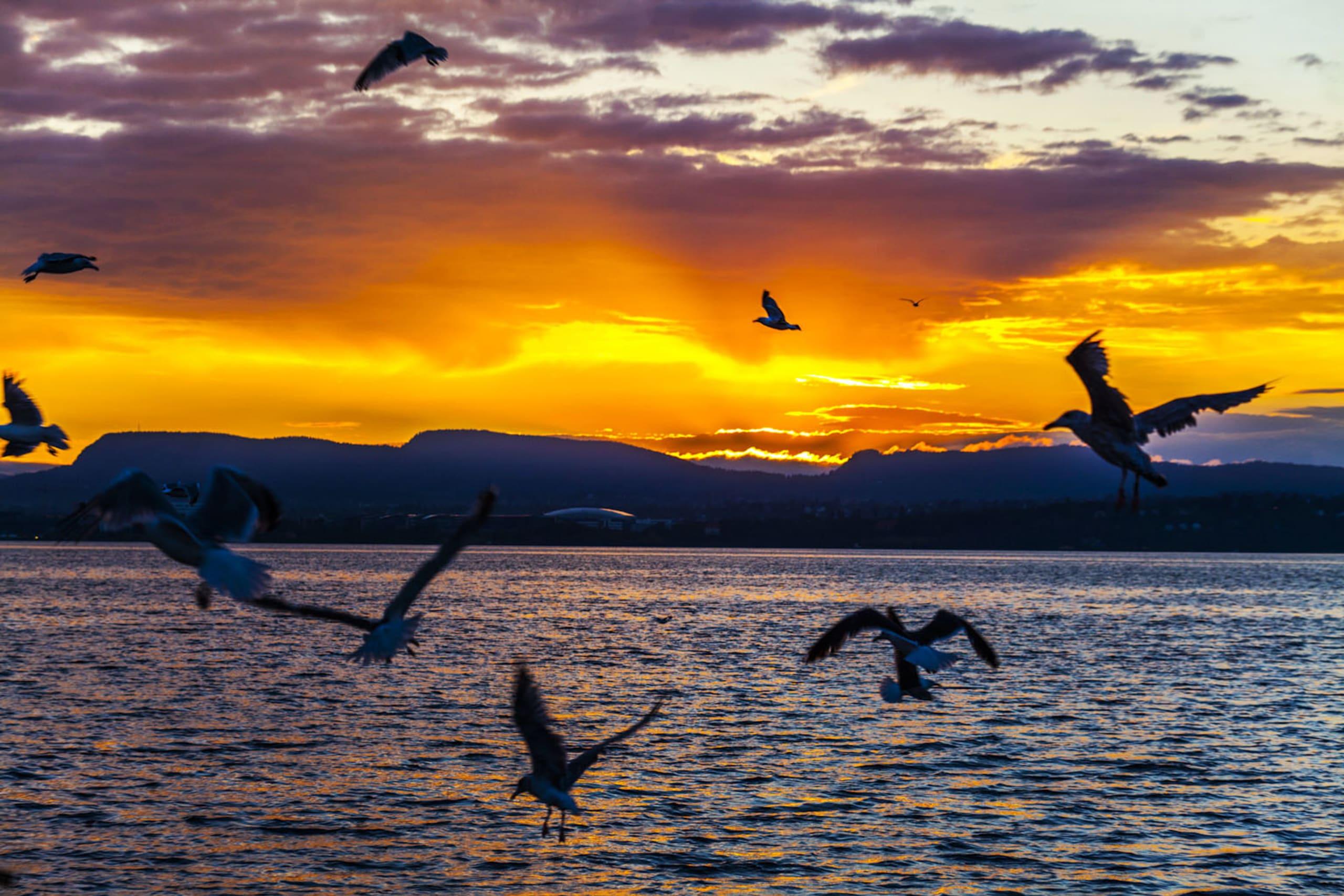 Oslofjord sunset