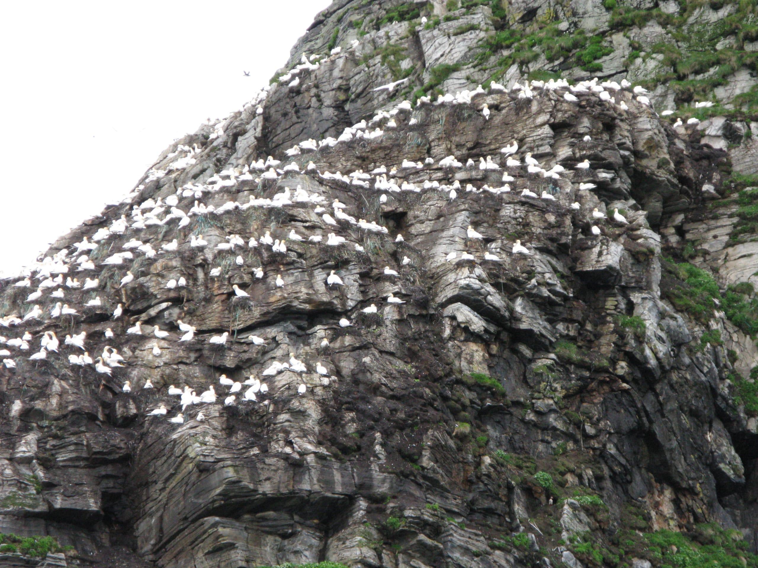 Gjesvær bird mountain