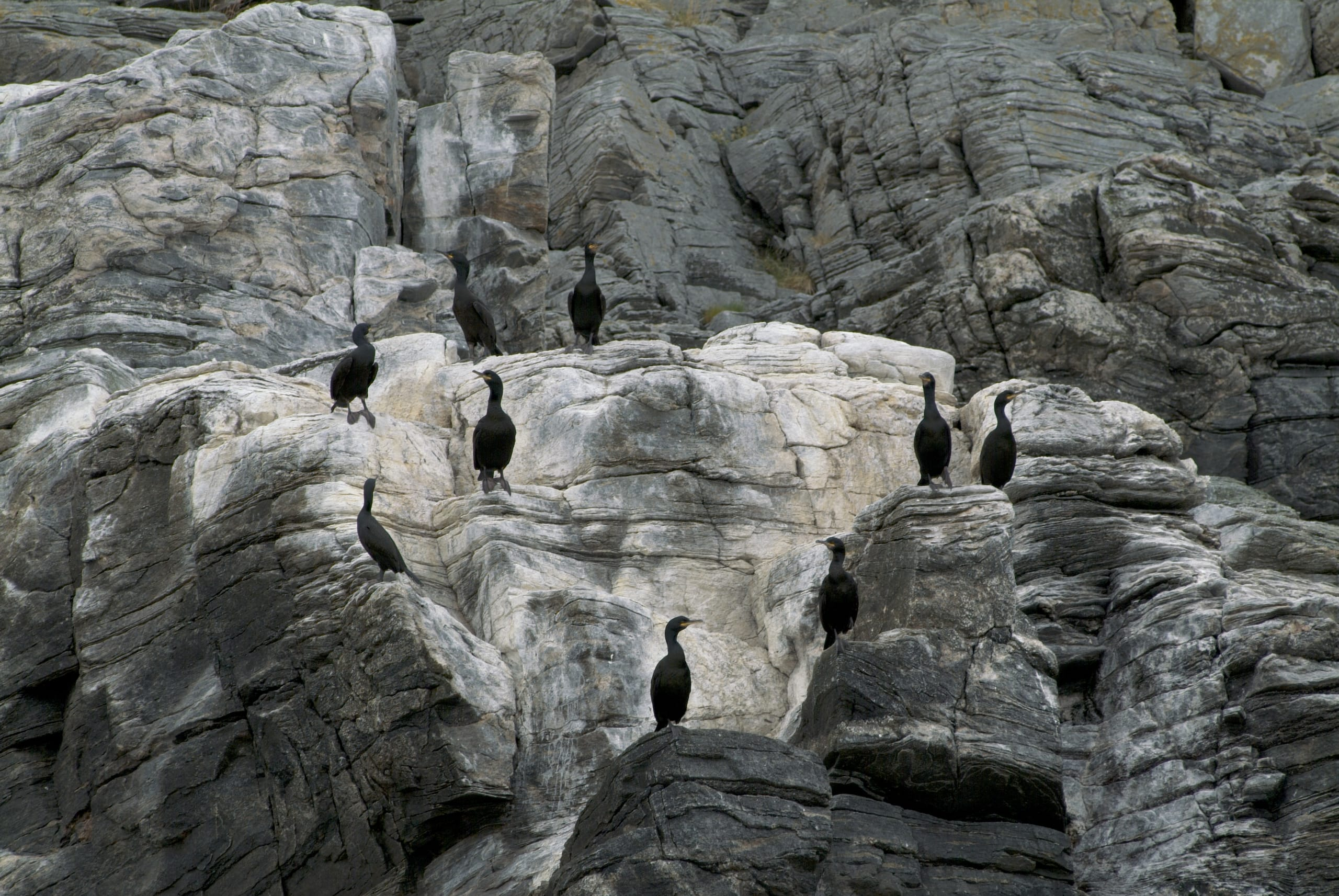 Birds on Gjesvær