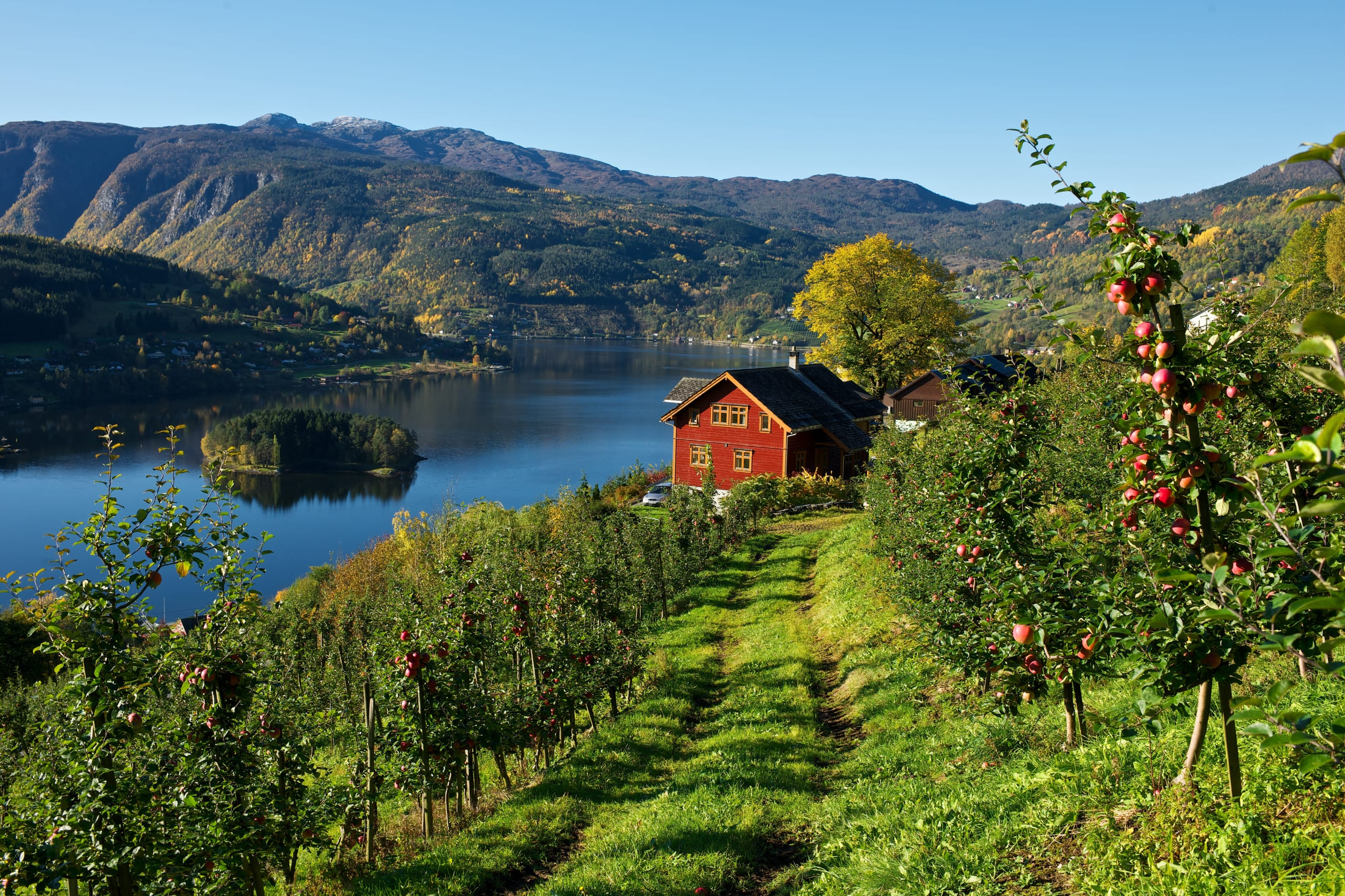 Apple farm in Hardanger