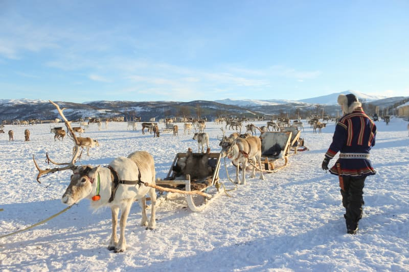 Reindeer sledding in Tromsø