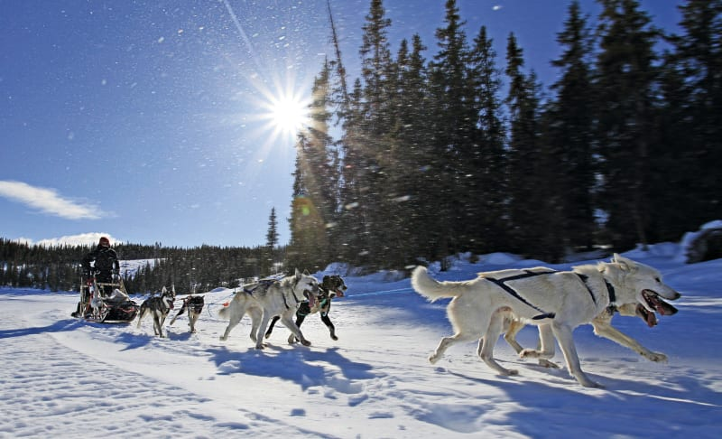 Dog sledding safari in Jotunheimen National park