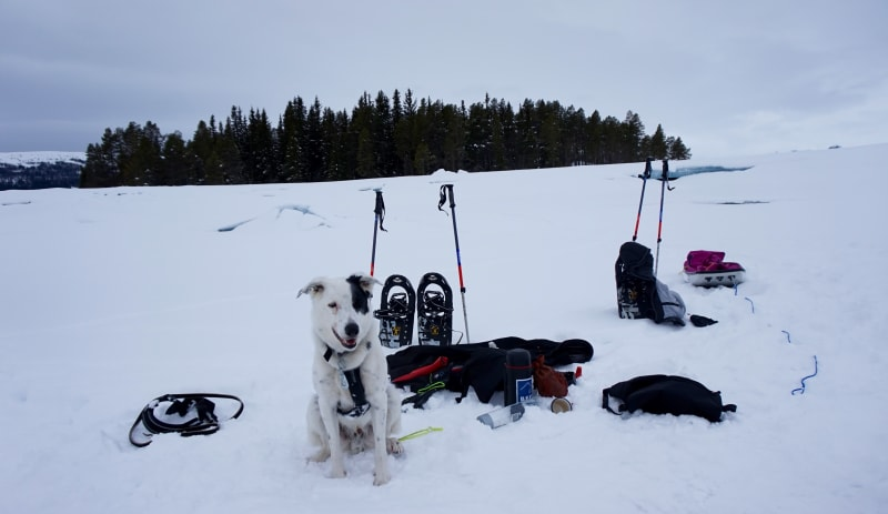 Snowshoeing at Beitostølen with husky