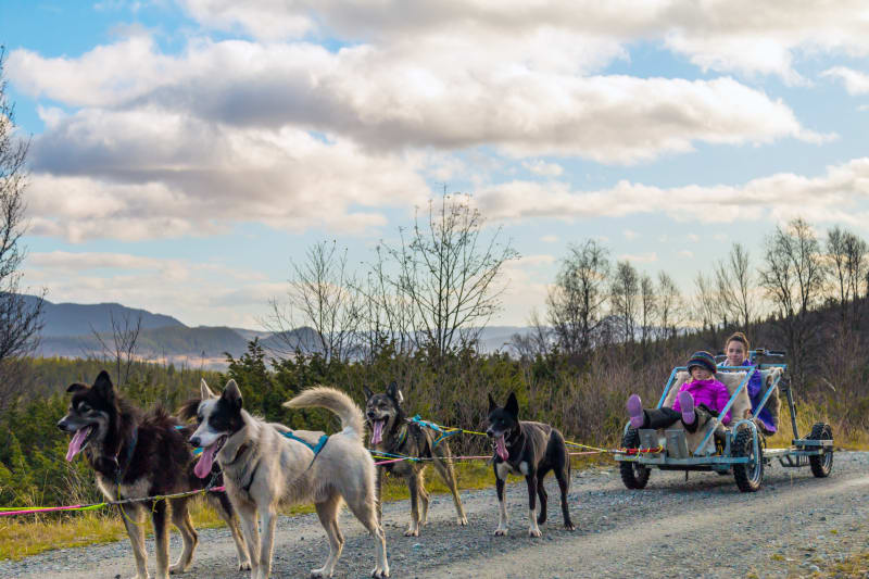 Dog sledding on wheels at Beitostølen