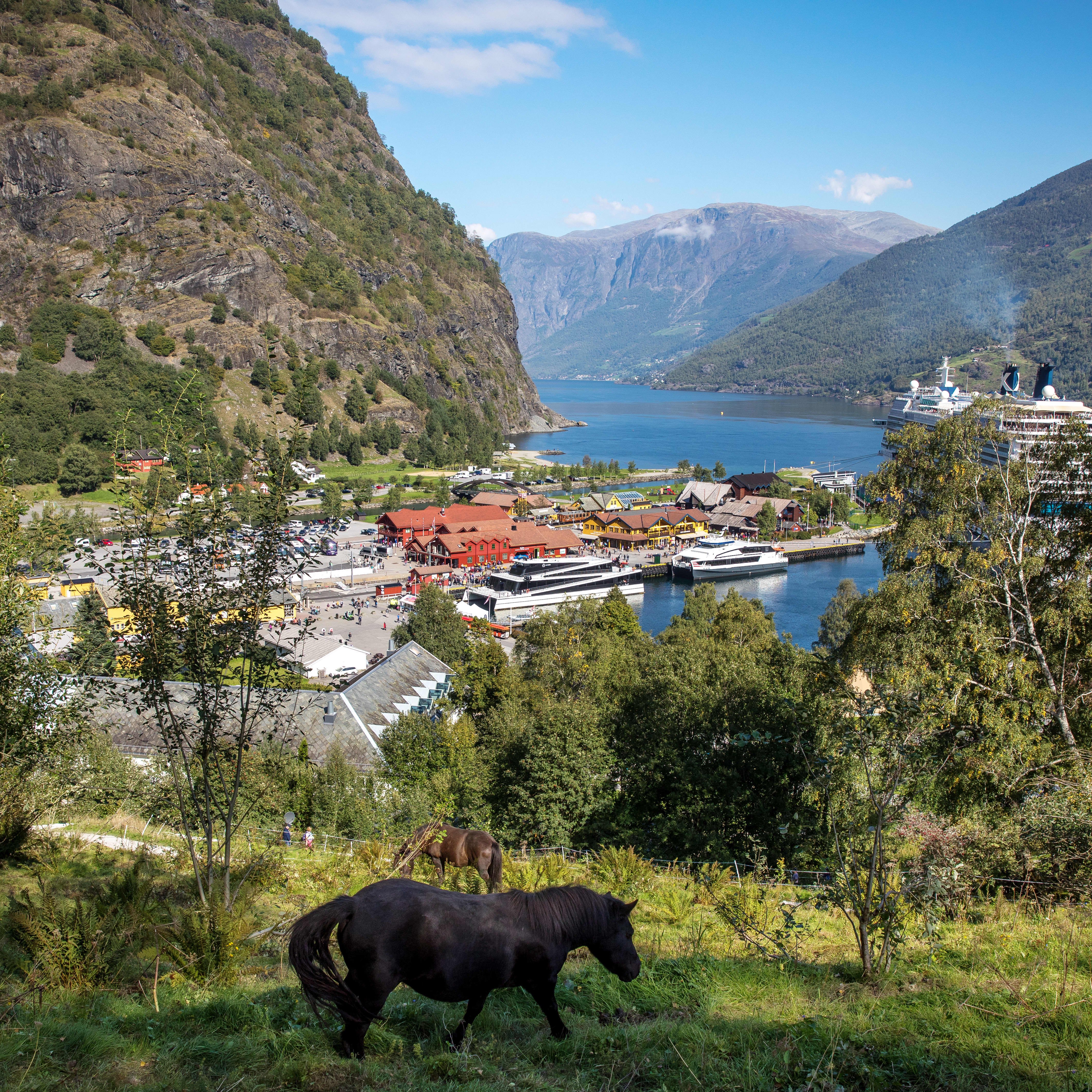 A view of Flam seen from the hillside above the village. A black horse is walking in the foreground.