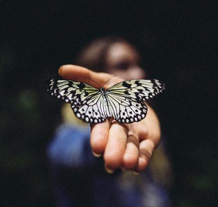 The Butterfly Effect in Freelancing