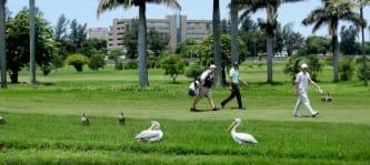 Golfer und ihre Vögel: Albatrosse und Eagle sind ihnen am liebsten, doch auch zu einem Birdie sagen sie nicht nein. (Foto: Getty)